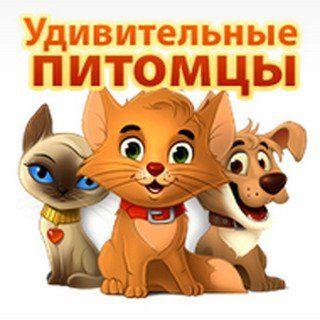 """Игра """"Удивительные питомцы"""""""