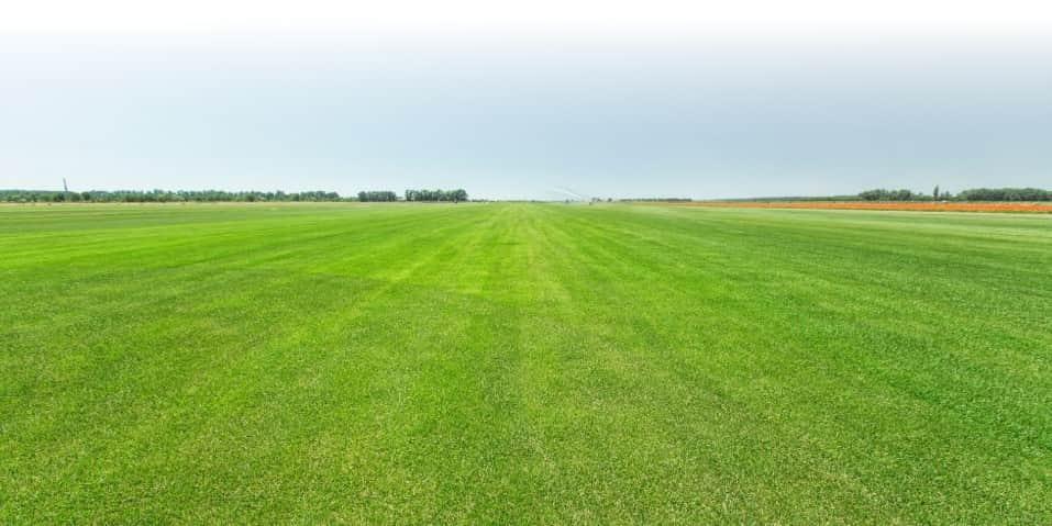 Почему трава зеленого цвета?
